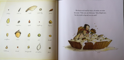 On the left, the page mentioned above with the seed pictures and  names. On the right, Miss Maple tenderly scrubbing the orphaned seeds.