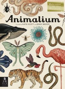 Animalium by Katie Scott & Jenny Broom